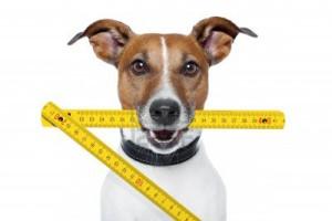 13005631-klusjesman-hond-met-gele-duimstok