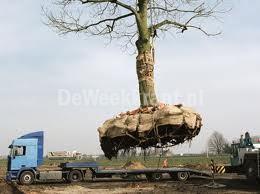 3_int_bomen_verplanten