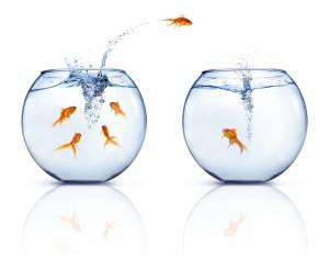 fish-jumping