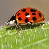 ladybird_165x165_631487a