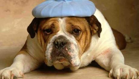 zieke-hond